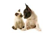 Diferenta dintre caini si pisici (VIDEO)