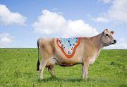Picturi pe vaci de Emma Hack (FOTO)